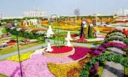 Dubai Miracle Garden (43)