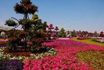 Dubai Miracle Garden (51)