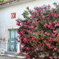 Rengarenk çiçekli kapı giriş tasarımları (9)