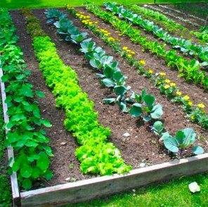 İnanılmaz Bahçe Düzenleme Fikirleri - Kendin yap (35)