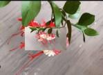 Kağıttan Küpe (Fuchsia) Çiçeği Yapımı-1