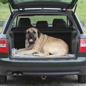 Laws to Protect Pets in Cars