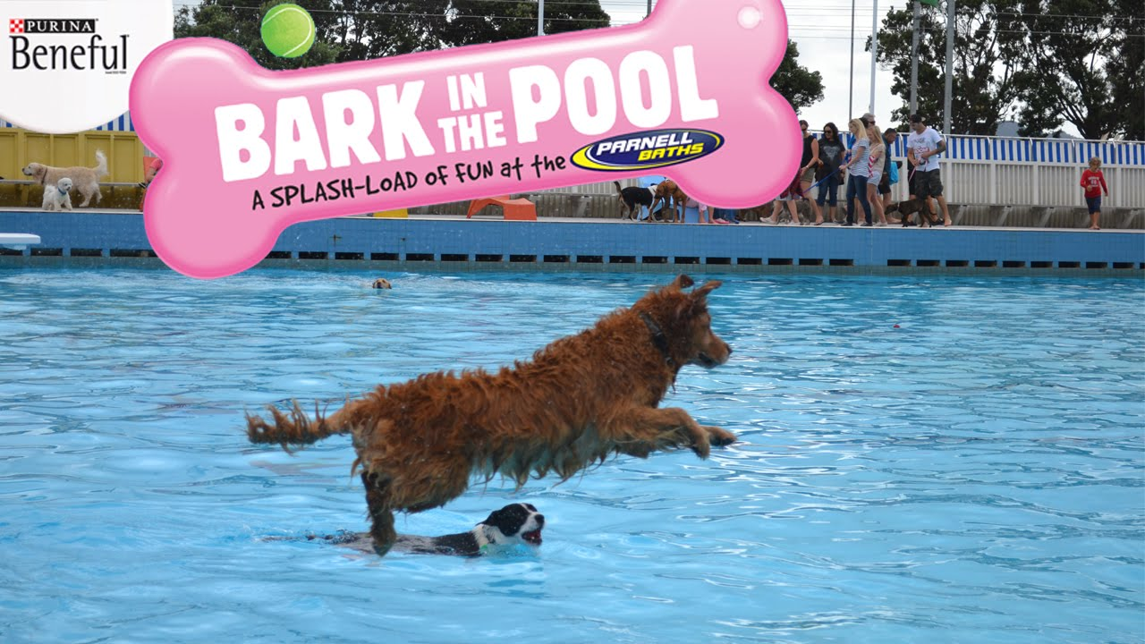 Parnell Pools – caninecapersblog