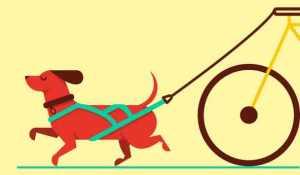 dog pulling a bike