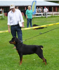 Certifications Your Dog can Complete via Private Dog Training