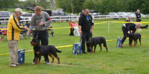 Dog training in Holbrook MA