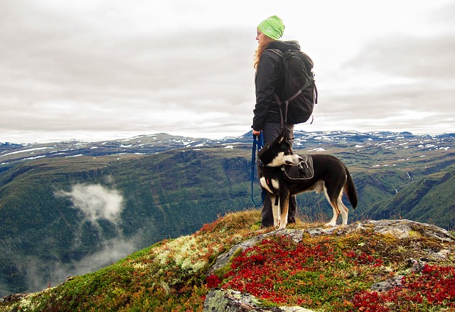 Preparing to Hike With Your Dog