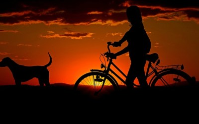 Losing Daylight: How To Keep Your Dog Seen