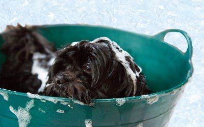 The Importance of Winter Grooming for Dogs