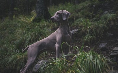 Best Dog Breeds for Outdoor Enthusiasts