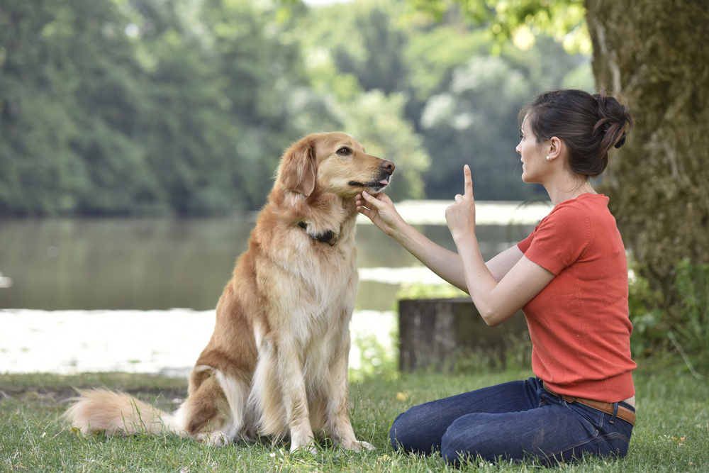 Why Training Your Dog is Important