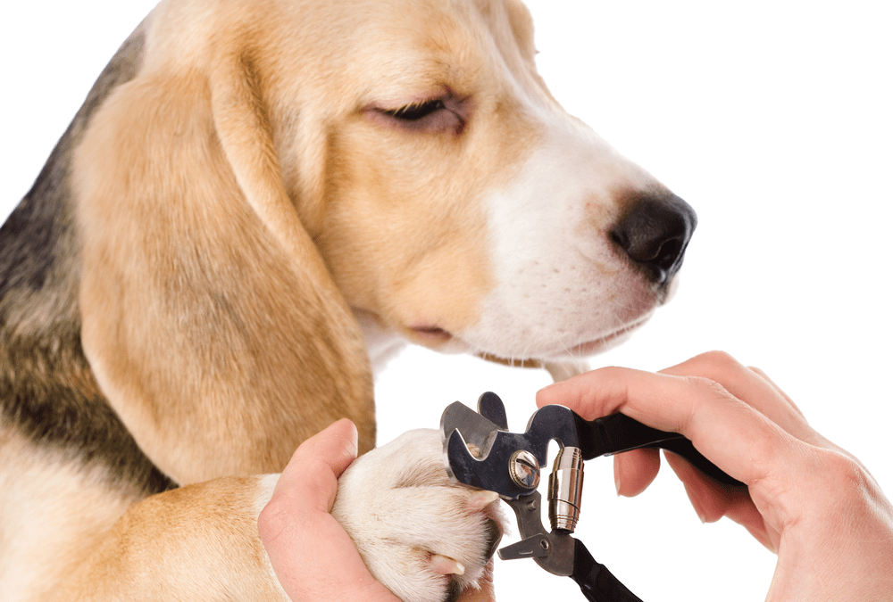 Tips for Trimming Your Dog's Nails
