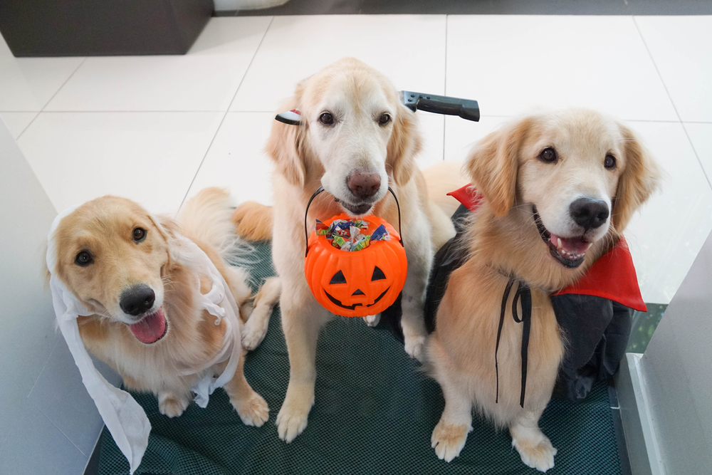 Halloween Candies to Keep Away From Your Dog