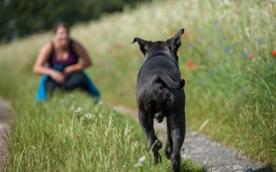 Teaching Your Dog to Come When Called