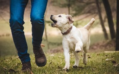 5 Habits of Effective Dog Owners