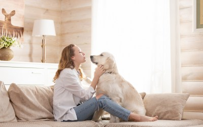 Fun Ways to Bond With Your Dog During Quarantine