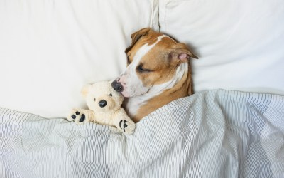 Should I Let My Dog Sleep All Day?