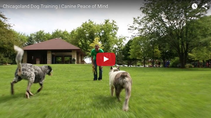 Chicagoland Dog Training at Canine Peace of Mind.