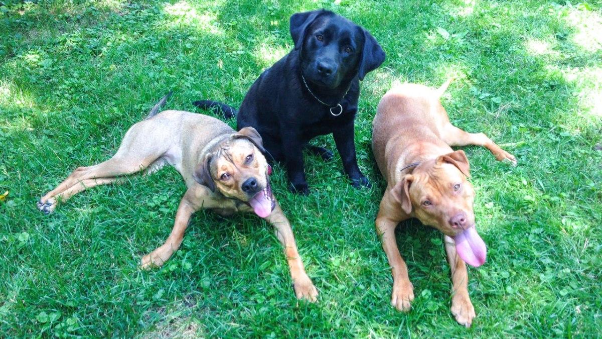 Chicago Dog Training and Puppy Training
