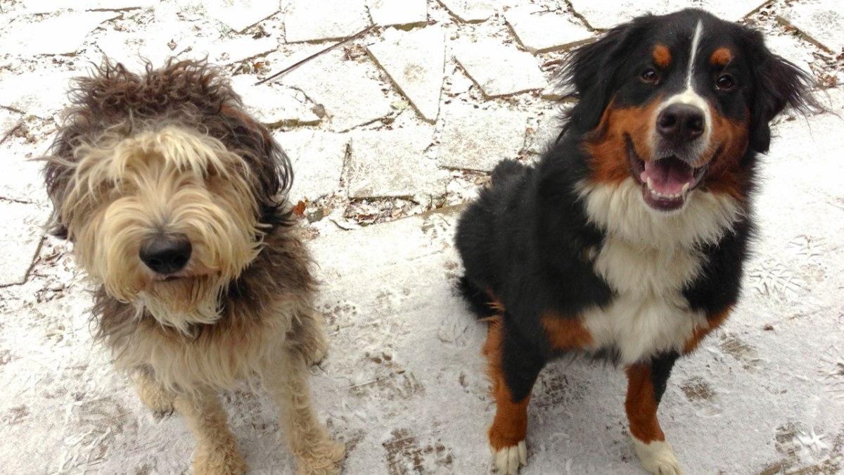Chicago Dog Training at Canine Peace of Mind