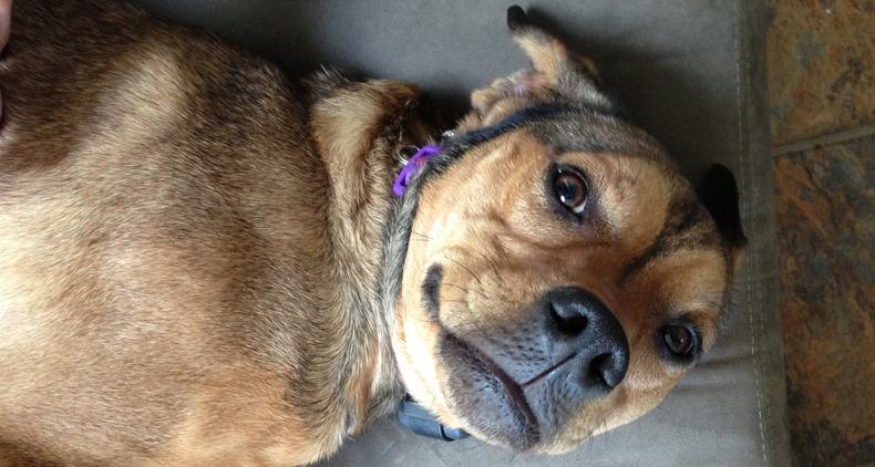 Rescue-Puppy-Frankie