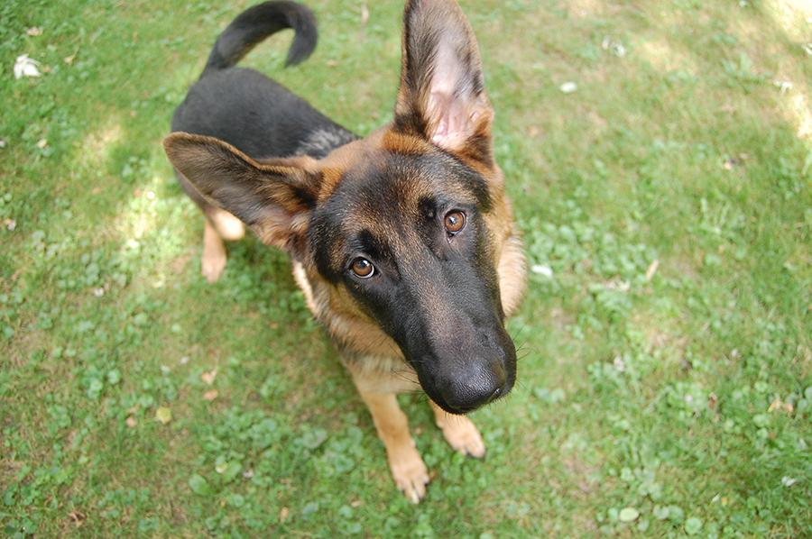 dog owner's guilt