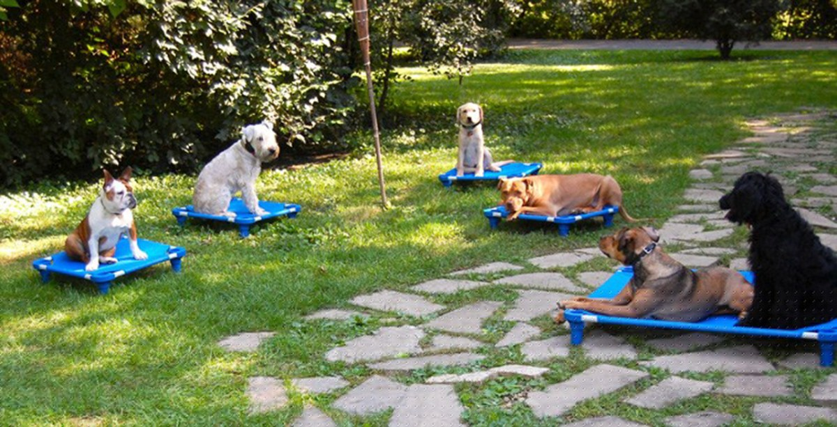 Chicago Dog Trainers - Canine Peace of Mind
