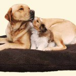 finding the best dog beds for large dogs