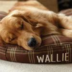 waterproof and chew resistant dog bed