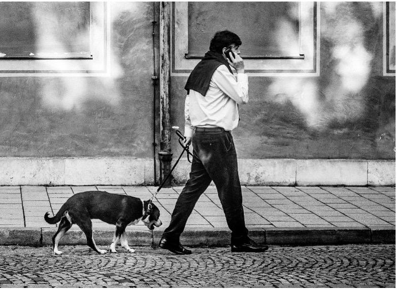 slow dog walk