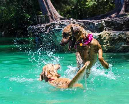 Two dogs playing in water