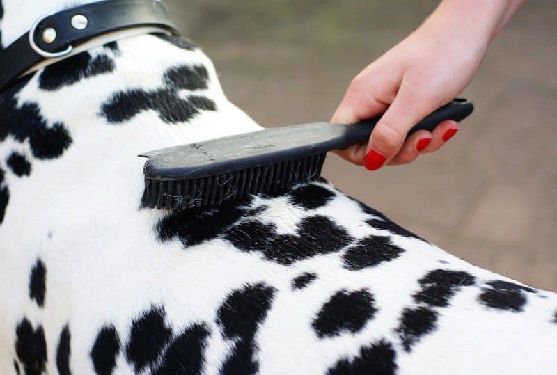 6 Tips To Manage Your Dog's Shedding