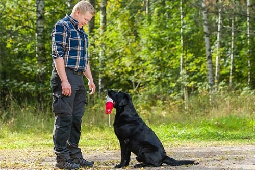 Man teaching his dog drop it command
