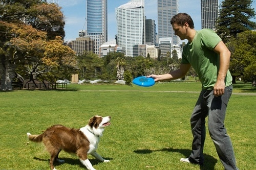 Man and a dog playing with frisbee in the park