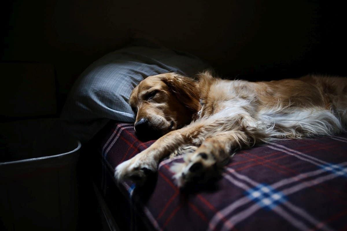 melatonin for dogs 2