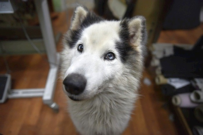 best large dogs for apartments 9