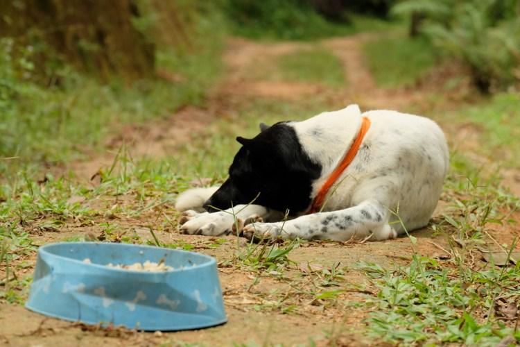 dog stopped eating