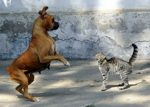 dog_cat2
