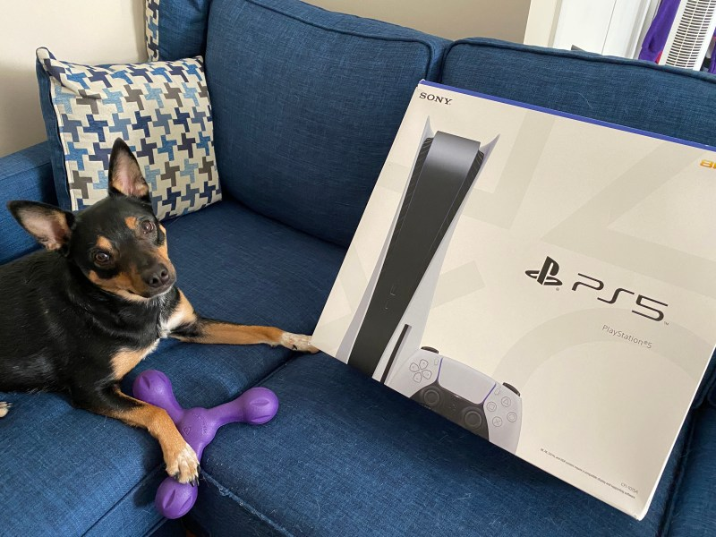 My dog on the couch with her toy laying beside the PS5 box.