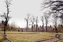 Cmentarz z I wojny światowej Nr 15 widok na część południową