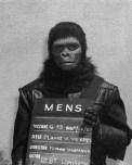 CIBASS El planeta de los simios doce