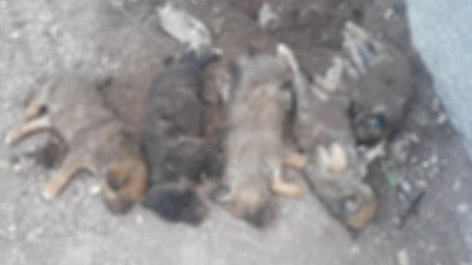 Çankırı'da mezarlık içerisinde ölü yavru köpek iddiası