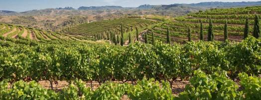 route des vins priorat espagne costa dorada catalogne
