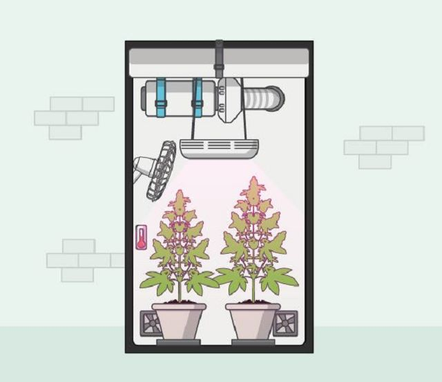 canna wiki.de technisches Equipment - Cannabis Anbau
