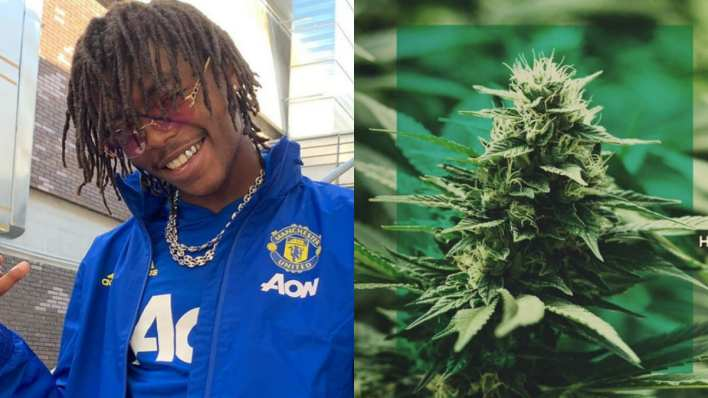 image koba laD et fleu de cannabis à côté