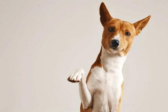 chien qui lève la patte, cbd et animaux