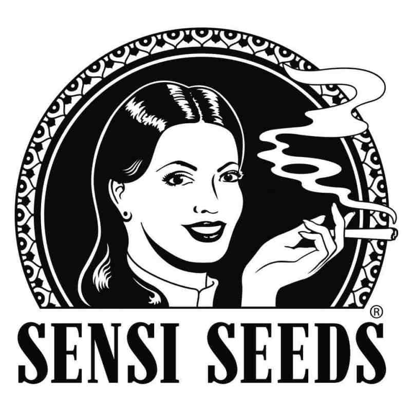 CBD Sensi Seeds