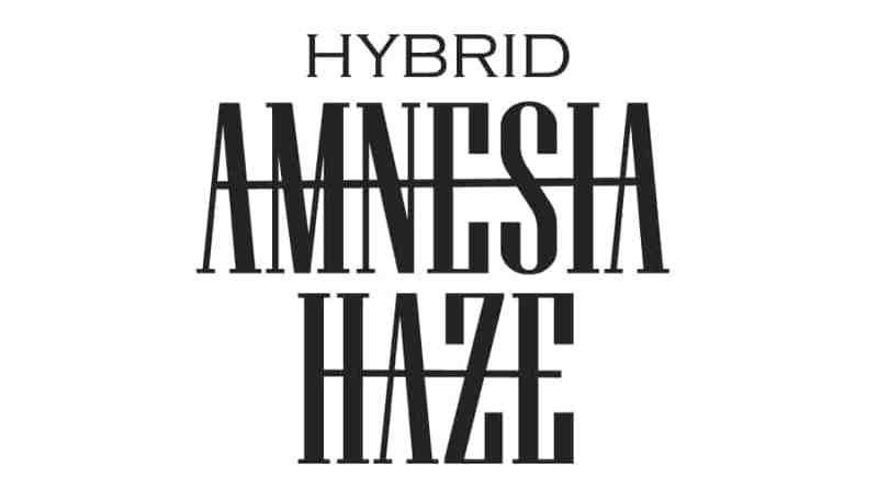 Amnesia Haze – Hybrid