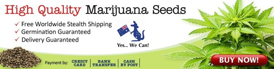 Buy Cannabis Seeds Australia Delivery Guaranteed.