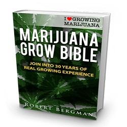 Cannabis Seeds Grow Guide.